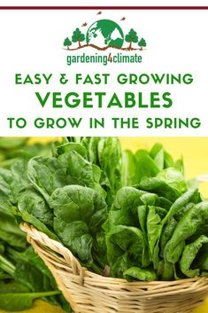 In the spring fresh vegetables from the garden can be scarce. Here are 7 fast and easy to grow vegetables that will fill the gap! Fast Growing Vegetables, Home Grown Vegetables, Organic Vegetables, Organic Gardening, Gardening Tips, Sustainable Gardening, Building Raised Garden Beds, Raised Beds, Vegetable Garden Tips