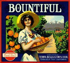 Fruit crate label art: RED BALL CITRUS LABELS