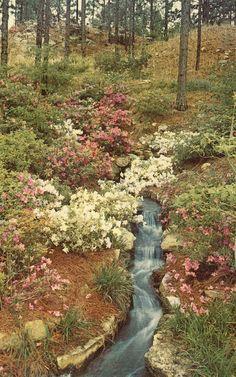 View in Hodges Gardens - Many,Louisiana