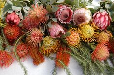 Wholesale Flowers offers Fresh Protea Mix Flowers for Sale, which is the perfect way of decorating your place for your special events.