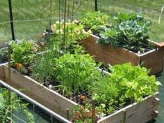 Square Foot Gardening- often in Raised Beds, growing vegetables in tight spaces