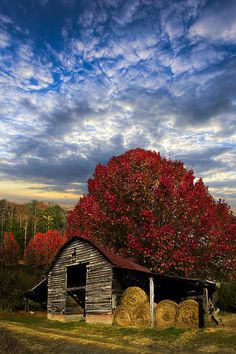 Old barn and a beautiful red tree in autumn! Country Barns, Country Life, Country Living, Country Roads, Farm Barn, Old Farm, Gravure Photo, Barn Pictures, Amazing Pictures