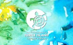 turtle circle