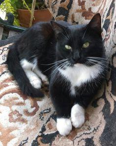Looks like a stray cat I use to feed...named him Sam...R.I.P sweet boy...