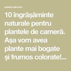 10 îngrășăminte naturale pentru plantele de cameră. Așa vom avea plante mai bogate și frumos colorate! - Perfect Ask Wood Floor Bathroom, Bathroom Shelves, Clubwear, Bookcase Desk, Iron Shelf, Mini Vestidos, Corner Shelves, Aliexpress, Sexy