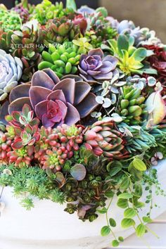 Succulent Gardening, Succulent Terrarium, Planting Succulents, Container Gardening, Planting Flowers, Colorful Succulents, Growing Succulents, Succulents In Containers, Air Plants