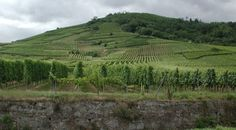 lorraine france ruins | Vineyards Above Assmanshausen, Germany