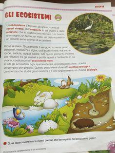 Gli ecosistemi