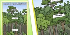 These display posters feature a series of lovely hand drawn images to illustrate your teaching on this topic. Great for enhancing your classroom, for general display, or as discussion prompts. Rainforest Project, How To Draw Hands, Layers, Display, Forests, Illustration, Poster, Image, Google Search