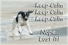 Sprocker Springer Spaniel Dog Funny Fridge Magnet Keep Calm Gift New in Collectables, Animals, Dogs Springer Spaniel Puppies, Cocker Spaniel Dog, English Springer Spaniel, Funny Dogs, Cute Dogs, Animals And Pets, Cute Animals, Dog Quotes, Mans Best Friend