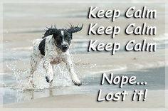 Sprocker Springer Spaniel Dog Funny Fridge Magnet Keep Calm Gift New in Collectables, Animals, Dogs   eBay
