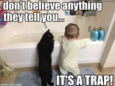 baby-cat-bath
