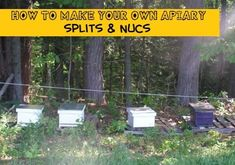 how to make your own apiary splits and nucs
