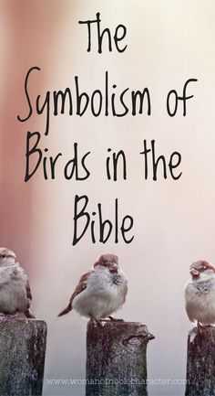 Birds in the Bible. A look at the symbolism of birds in His Word. Doves and sparrows in Scripture and their meaning with verses. #birds #Bible #symbolismintheBible #Biblesymbolism #birdsintheBible #faith #Biblestudy #Christian #Christianity #Christianwomen #Christianwoman