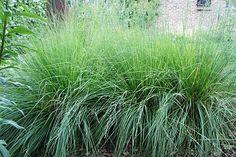 Groen.net - uw online tuinman