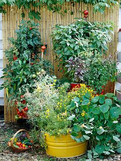 Herbs and Vegetables in containers, with Bamboo Screen