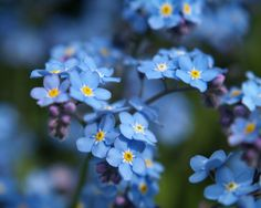 I demand that Forget Me Not's be in your bouquet :) They are Alaska's official state flower... how perfect that they are blue and that they represent where you got engaged!