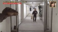 Omgs this is so funny!   And then this happens. | Japanese Velociraptor Prank Is The King Of Pranks