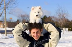 I'm obsessed with Samoyeds <3
