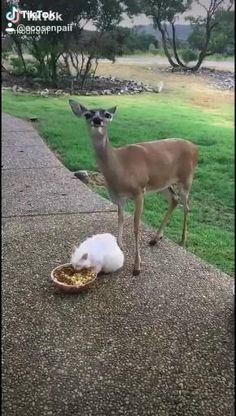 Cute Little Animals, Cute Funny Animals, Cute Cats, Cute Animal Videos, Funny Animal Pictures, Animal Memes, Animals Beautiful, Pet Birds, Animals And Pets