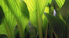 Leaves, Wet, Rain, Drops, Plant