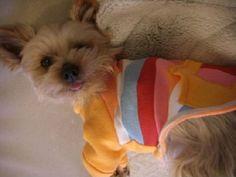 DIY Sweater Dog Clothes