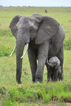 Photographic Print: Masai Mara Elephant by Jim Varley Photography : Jungle Animals, Cute Baby Animals, Animals And Pets, Wild Animals, Elephant Pictures, Elephants Photos, Baby Elephants, Asian Elephant, Elephant Love
