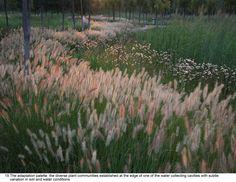 Wildflower grasses garden