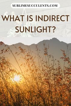 Wondering what is indirect sunlight? More than a few gardeners have been stumped when presented with the term 'indirect sunlight'. You might have even run into a care guide describing your succulent's ideal light levels as 'bright, indirect light'. Check this pin for more details! #gardening #indirectsunlight #sunlight Cacti And Succulents, Cactus Plants, Curtains Or Shades, Light Meter, Low Light Plants, Succulent Care, Plant Needs, The More You Know, Types Of Plants