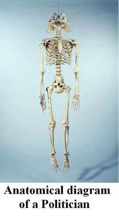 Anatomical diagram of a politician