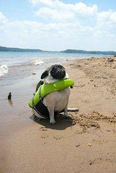 A pug in a lifejacket triumphantly facing her destiny: