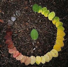 The life cycle of a leaf.