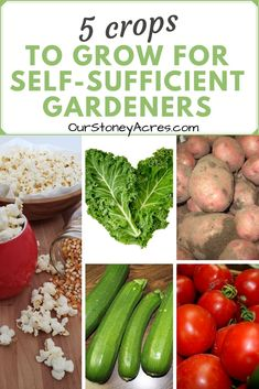 Some crops are better than others to grow when you are focusing on providing your own food. If you really want to be self-sufficient gardeners than here is a list of the 5 best crops to grow. When To Plant Vegetables, Planting Vegetables, Organic Vegetables, Growing Vegetables, Backyard Vegetable Gardens, Outdoor Gardens, Garden Landscaping, Survival Food, Urban Survival