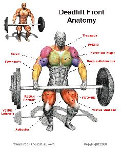 deadlift anatomy Fitness weight lifting Now this all I'm going to se if I watch Robert lift!
