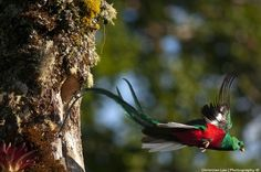 Green Wing, Vertebrates, Bird Feathers, Habitats, Birds, Animals, Animales, Animaux, Bird