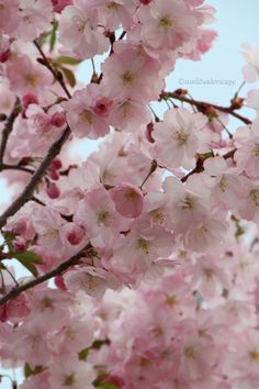 The perfection of blossoms. <3