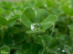 Rain drop.. by TMNT224.deviantart.com on @deviantART