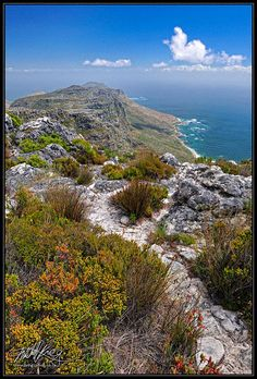 The Cape Fynbos is as diverse as life itself. From Mitchell Krog's Cape Photography Collections. (Copyright Mitchell Krog - All Rights Reserved)