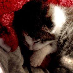 1 week old kitten I'm bottle feeding!
