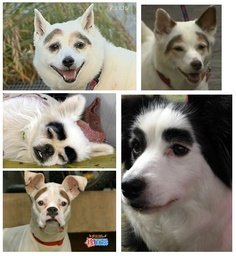 OMG!!! I have to get an eyeliner and decorate my doggies and have a good laugh!!