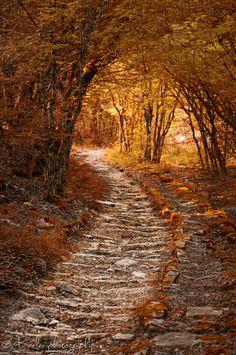 Autumn path by Kate Eleanor Rassia on 500px #autumn #fall #orange #warm
