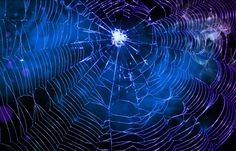 Spider Web Wallpaper For Mac #WH1