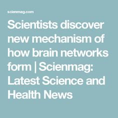 Scientists discover new mechanism of how brain networks form | Scienmag: Latest Science and Health News