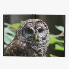 It's cool! This Barred Owl iPad Air Cover is completely customizable and ready to be personalized or purchased as is. Click and check it out!