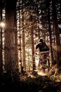Evening Mountain Bike