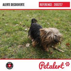 Cette Alerte (205227) est désormais close : elle n'est donc plus visible sur la plate-forme Petalert Suisse. L'animal a pu être remis à son propriétaire Merci pour votre aide. Visible, Aide, Dogs, Switzerland, Thanks, Shape, Dog, Animaux, Pet Dogs