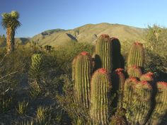 Chihuahua, Mexico su flora