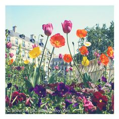 8x8, 12x12, or 20x20 Flowers, Springtime, April in Paris, colorful (56 AUD) ❤ liked on Polyvore featuring home, home decor, wall art, colorful wall art, blossom wall art, flower wall art, colorful home decor and flower home decor