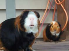 More adorable pics of these pig pals if you click through.