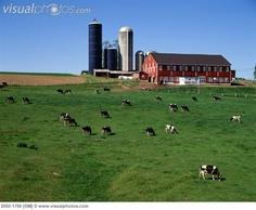 Pennsylvania dairy barns - Google Search